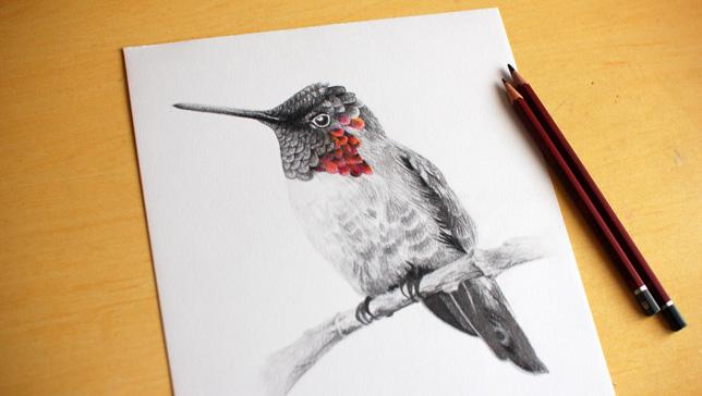 eikona-zografise-ena-poyli-draw-a-bird-day