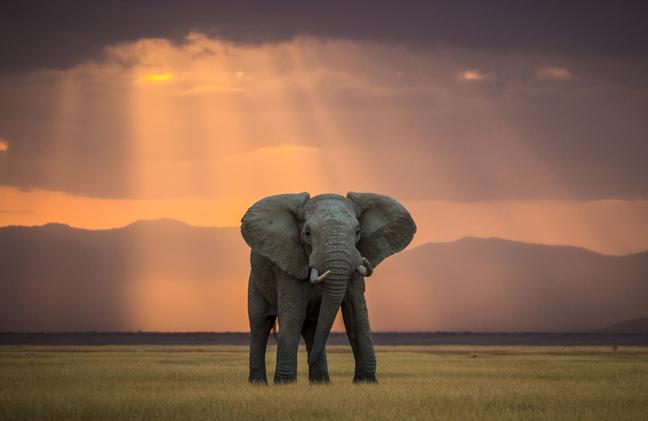 pagkosmia-imera-tou-elefanta